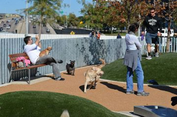 Dog Friendly Things To Do In Dallas Activities And Attractions Dog Friends Dog Friendly Vacation Dog Training Obedience
