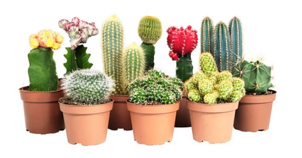 cactaceae potted plant ikea the big red one and the one on the far right side. Black Bedroom Furniture Sets. Home Design Ideas