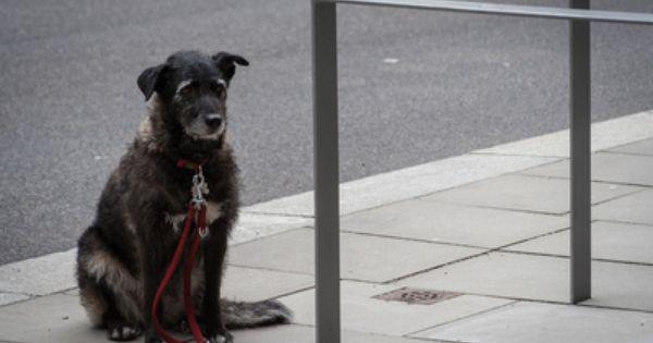 Top 11 Povedencheski Problemi Pri Kucheto 2 Chast Dogs Animals