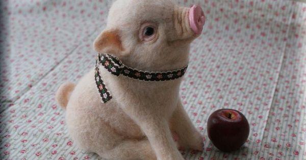 Teacup pig!
