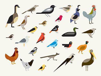 Bird illustration style