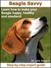 I Love My Beagle He Is So Sweet But Hates To Listen Anything