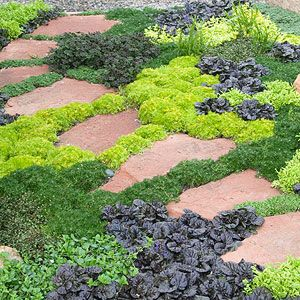 10 Tough Groundcovers That Can Solve Your Worst Landscaping Problems Ground Cover Plants Plants Low Maintenance Backyard