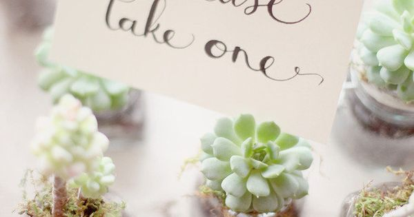 Succulent Party Favors on Pinterest | Succulent Wedding Favors ...