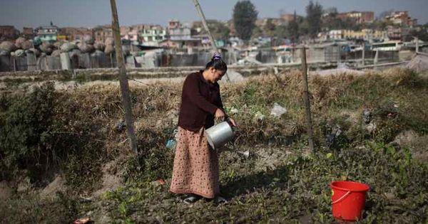 3fb26ff6af68a567d73b567c3c203c29 - What Is The Importance Of Urban Gardening