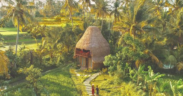 Dd Bamboo Lodge Bamboo Eco In Rice Fields Cabins For Rent In Kecamatan Gianyar Bamboo House Ubud House Styles