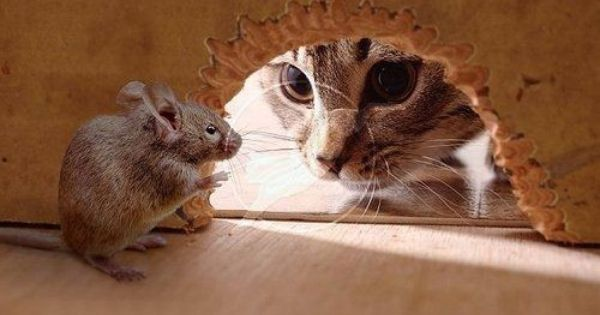 Animals are adorable! Even little mice!