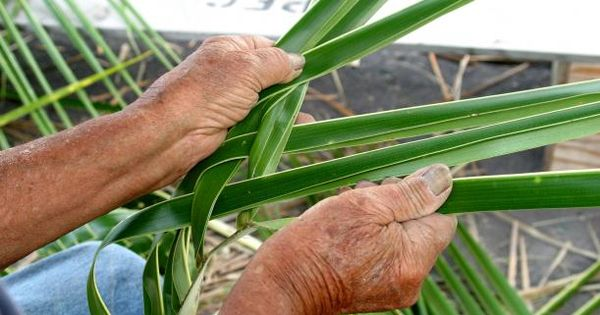 How To Weave Palm Fronds Into A Basket : How to weave palm frond basket weaving