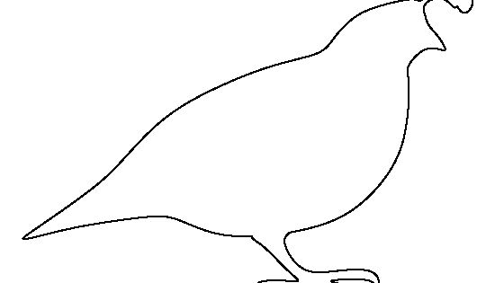quail outline - photo #12