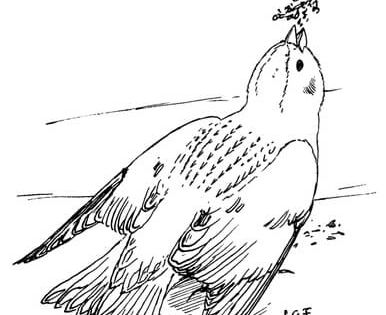 Snow Bunting Coloring Page From Bunting Category Select From