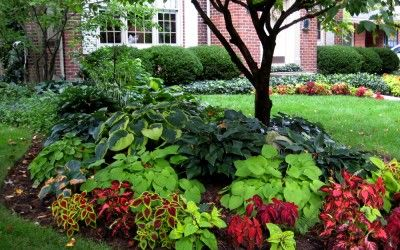 Front Yard Landscaping Ideas Around Big Trees With Garden Ideas