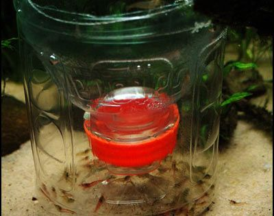 how to make a freshwater shrimp trap