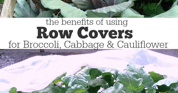 Benefits Of Using Row Covers For Broccoli Cabbage