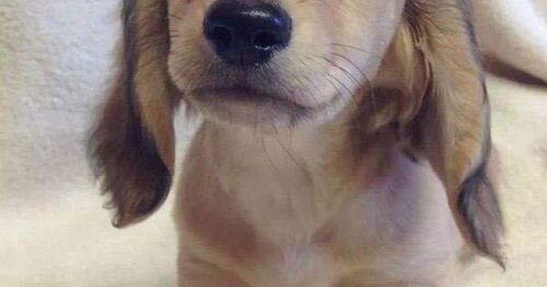 dustyfleas: Puppy breath … :)