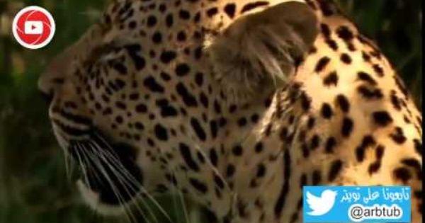 وثائقي حيوانات افريقيا الفتاكة خطط قاتلة Youtube