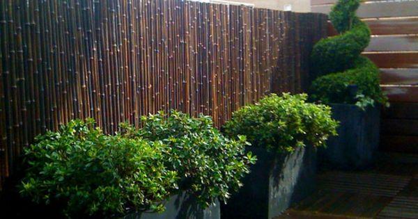 la canisse bambou une cl ture de jardin jolie et cologique canisse plantes. Black Bedroom Furniture Sets. Home Design Ideas