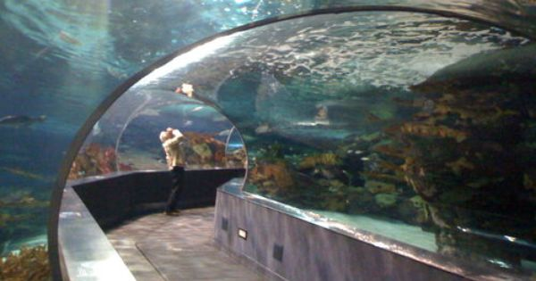 Ripley S Aquarium Myrtle Beach Sc Southern Destinations Pinterest Sharks Myrtle Beach Sc