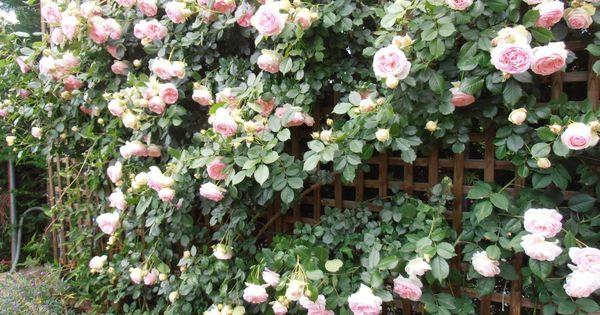 El jard n de la alegr a como se podan los rosales for Cancion el jardin de la alegria
