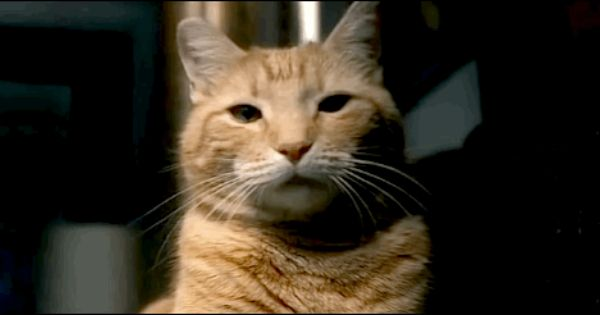 Inside Llewyn Davis Cat Later We Find Out His Name Is Ulysses And It All Makes Sense Being A Coen Brothers Film A La O Brother Where Art Thou