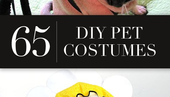 The ultimate DIY pet costumes list! doggiedash hero4pets