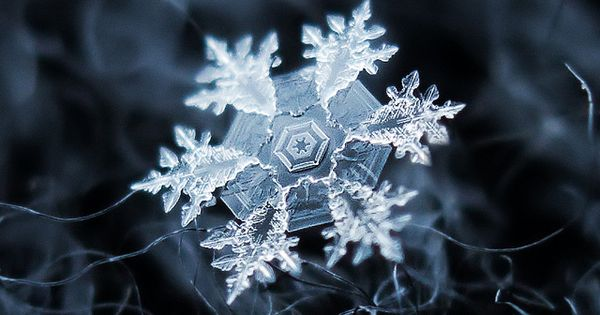 A snow flake close up