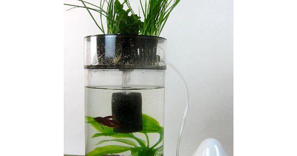 Desktop betta bowl aquaponic system uses wheat grass but for Betta fish aquaponics
