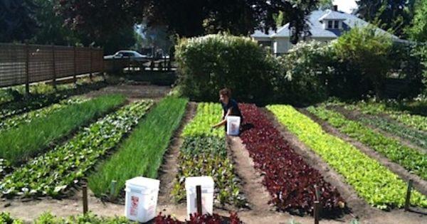 Half acre farm google search gardening pinterest for Half acre backyard landscaping ideas