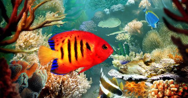 Fishies cool pinterest watches and fish for Exotic tropical fish