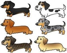 Dachshund Colors Patterns Weenie Dogs Sausage Dog Dachshund