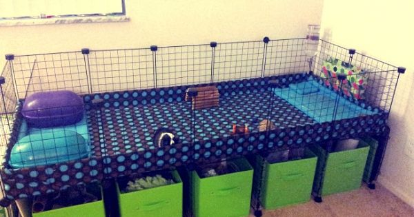 2x5 cage with stand dog crate to bunny cage pinterest for Guinea pig stand