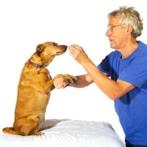 10 Pet Training Tips To Help Train Your Dog To Do Funny Tricks On
