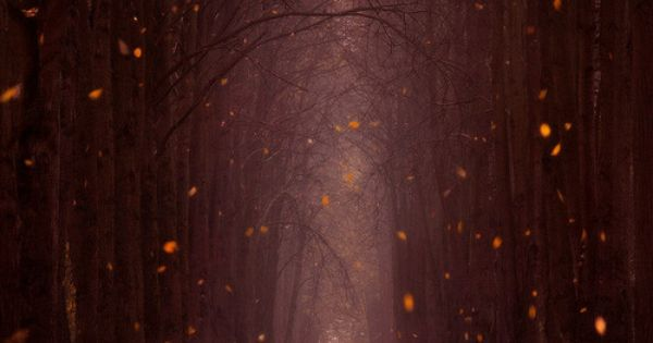 Falling Leaves, Minsk Botanical Garden, Belaru