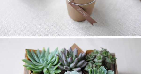 eco-friendly party favor or hostess gift: wrap small plant pots with kraft