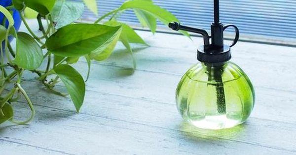ヒバ油の効果がすごい 天然の万能スプレーの作り方を紹介 ヒバ油