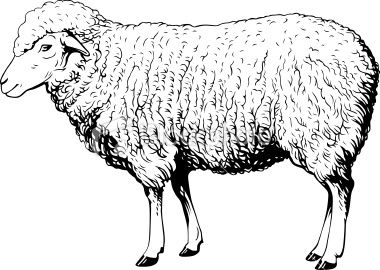 This Image Is A Black And White Vector Illustration Of A Domestic Sheep Drawing Vector Art Illustration Sheep