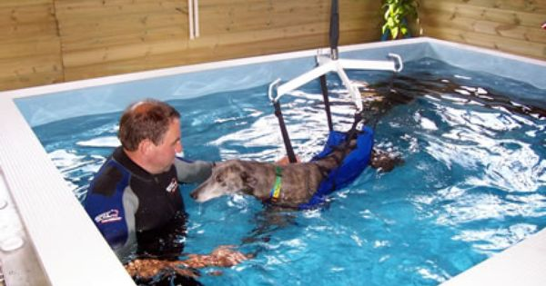 A Professional Hydrotherapy Centre For Dogs Will Use Special Equipment To Make The Experience As Safe And Comfortable Hydrotherapy Dog Equipment Paralyzed Dog
