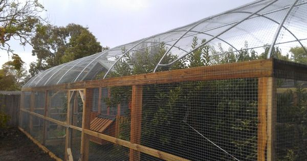 Hooped Run With Chicken House Amp Fruit Trees Designed