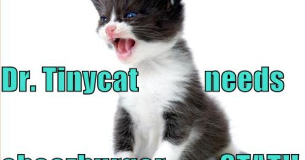 fairy tail cat name
