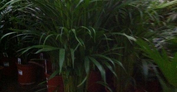 Hoof Slaapkamer Idees : Diverse groene kamerplanten breken CO2 af en ...