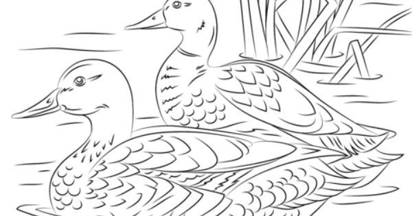 Coloriage Paire De Colverts Coloriages A Imprimer Gratuits Bird Coloring Pages Bird Drawings Animal Coloring Pages