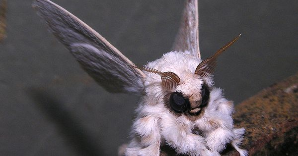 """In the latest """"insects that look like Pokemon"""" news, here's a Venezuelan"""