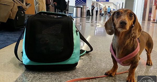 Flying With A Dog Sleepypod Air In Cabin Pet Carrier Review Pet