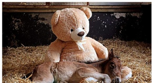 This may be the cutest thing I have ever seen. Orphaned foal's