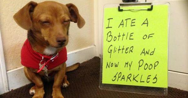 Funny Dog Shaming.