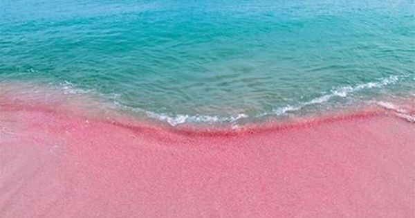 Barbuda's incredible pink sand beach — nearly eight miles ...