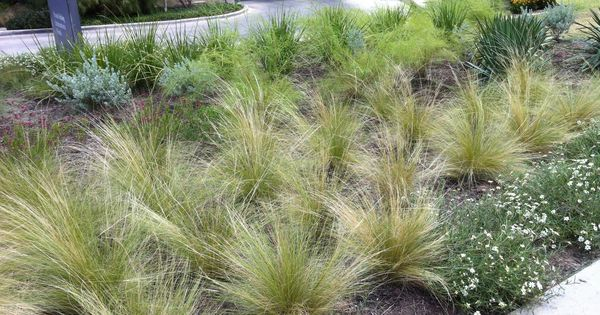 Drought tolerant grass idea gardens outdoor spaces to envy pinterest drought tolerant - Drought tolerant grass varieties ...