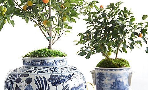 potting an indoor tree in 3 easy steps