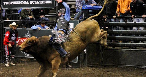 Sports Bull Riding Rodeo Sport Involves Rider Hd Wallpaper In 2020 Bull Riding Professional Bull Riders Bull Riders
