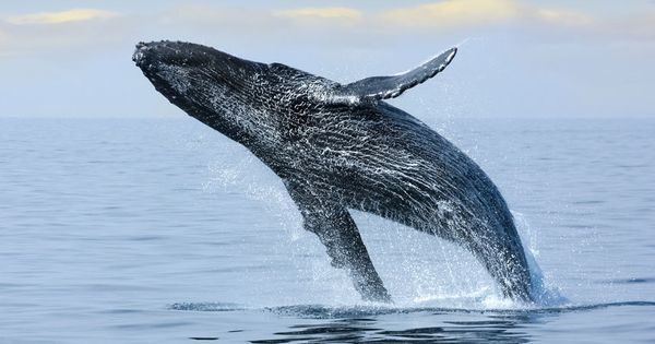 10 Of The Best Whale Watching Destinations Baja