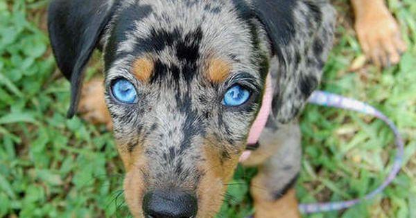 Riley The Dachshund Puppies Cute Animals Dachshund